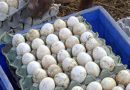 Now, poultry industry 'catches' Covid-19